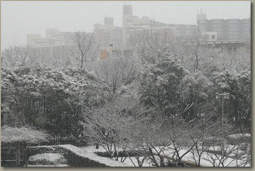 大阪雪景色4.jpg